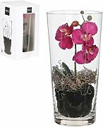 MICA Decorations Phalaenopsis, violett, 30