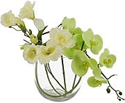 Moycor 2211616 Vase mit Orchidee Schmetterling,